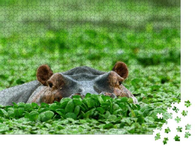 """Puzzle 1000 Teile """"Nilpferd, versteckt in Wasserpflanzen"""""""