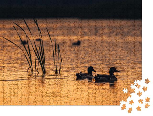 """Puzzle 1000 Teile """"Enten im Wasser des Sees während des Sonnenaufgangs"""""""