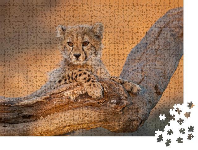 """Puzzle 1000 Teile """"Gepardenbabys auf einem Ast im Kruger Park, Südafrika"""""""