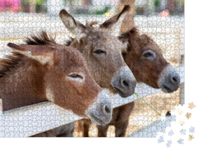 """Puzzle 1000 Teile """"Drei neugierige Esel am Zaun"""""""