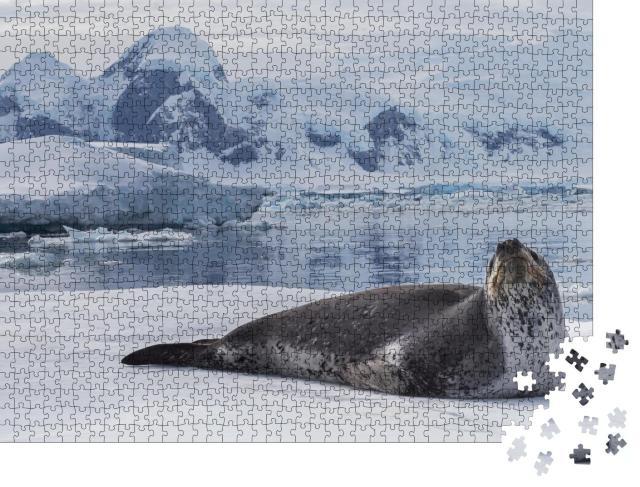 """Puzzle 1000 Teile """"Seeleopard, ein Raubtier der Antarktis"""""""