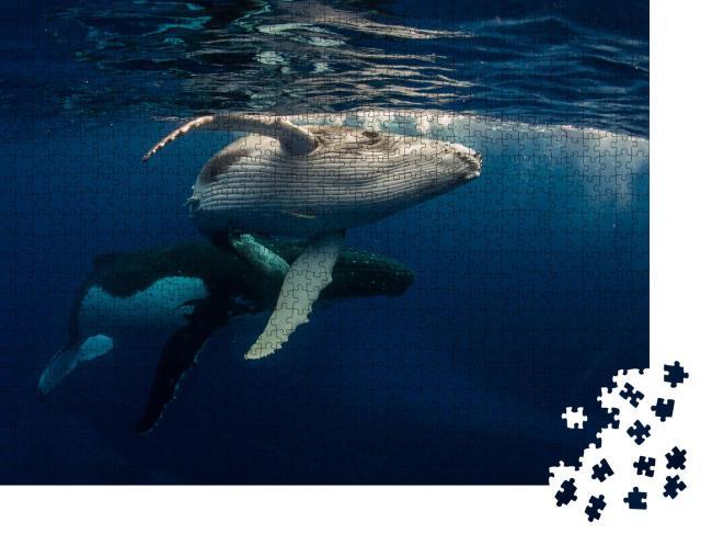 """Puzzle 1000 Teile """"Buckelwal und Baby beim Schwimmen direkt unter der Wasseroberfläche"""""""