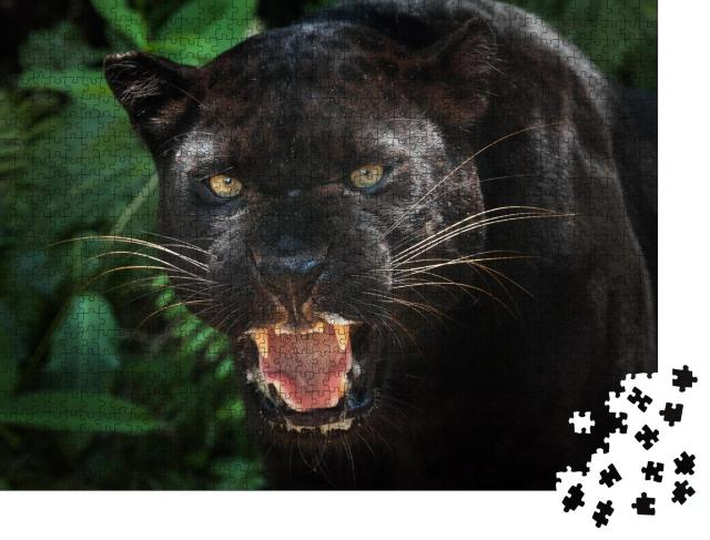 """Puzzle 1000 Teile """"schwarzer Panther"""""""