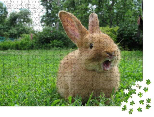 """Puzzle 1000 Teile """"Kleines gähnendes Kaninchen"""""""