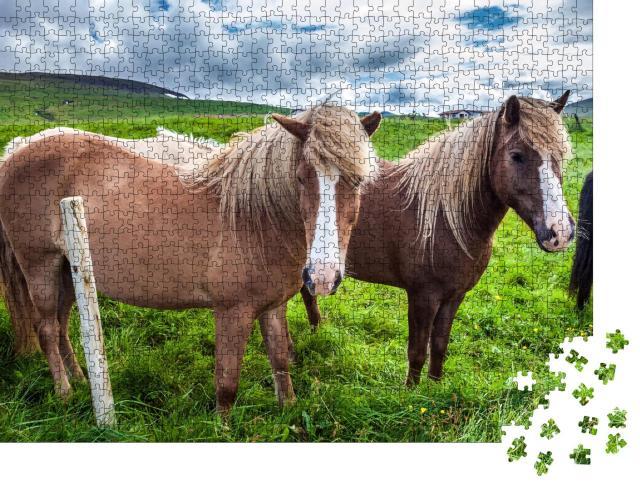 """Puzzle 1000 Teile """"Island-Pferde in der isländischen Tundra"""""""