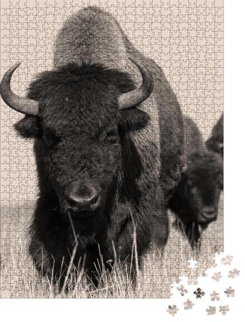 """Puzzle 1000 Teile """"Amerikanischer Bison oder Büffel, Sepia-Aufnahme"""""""