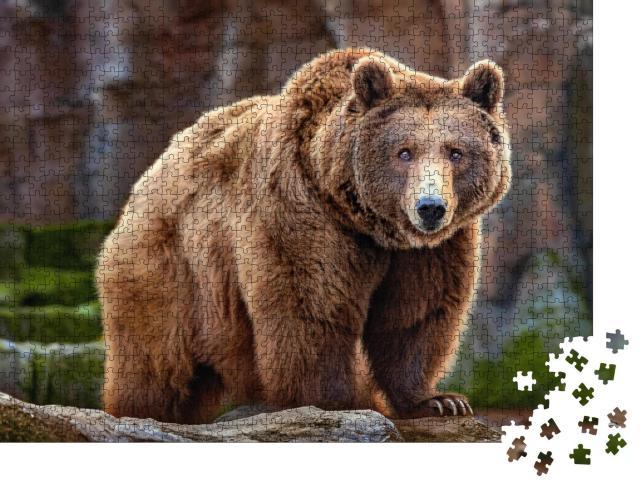 """Puzzle 1000 Teile """"Bild eines großen Braunbären"""""""
