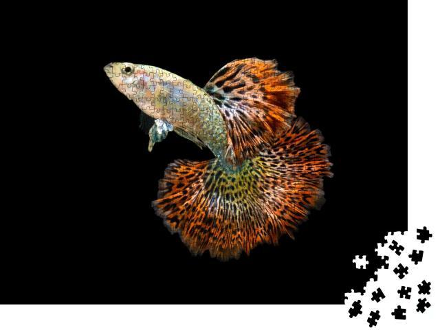 """Puzzle 1000 Teile """"Roter Drache: Der Guppy Fisch"""""""