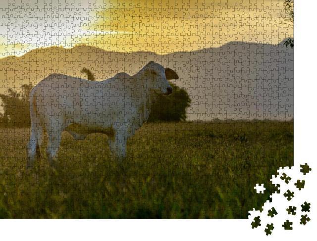 """Puzzle 1000 Teile """"Nelore-Rind auf der Weide im Sonnenuntergang"""""""