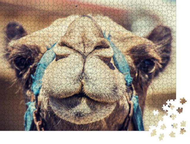 """Puzzle 1000 Teile """"Nahaufnahme eines Kamels"""""""