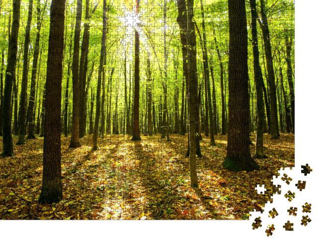 """Puzzle 1000 Teile """"Herbstwald mit Bäumen und Sonnenlicht"""""""