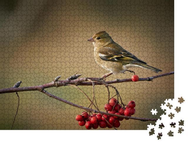 """Puzzle 1000 Teile """"Buchfink auf einem Zweig mit roten Beeren"""""""