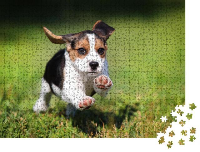 """Puzzle 1000 Teile """"glücklicher Beagle-Welpe, der im Gras läuft"""""""