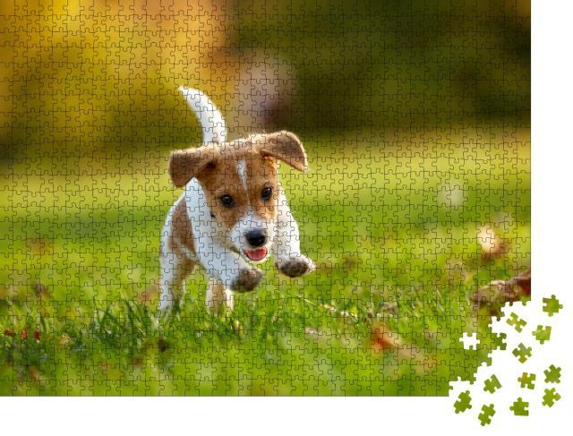 """Puzzle 1000 Teile """"Hunderasse: Jack Russell Terrier beim Spielen im herbstlichen Park"""""""