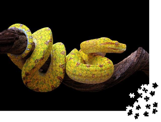 """Puzzle 1000 Teile """"Gelbe Baumpython, verschlungen auf einem Ast"""""""