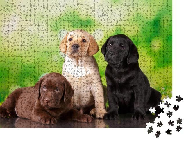 """Puzzle 1000 Teile """"Dreifach süß: Ein brauner, ein goldener und ein schwarzer Labrador-Welpe"""""""