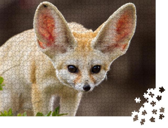 """Puzzle 1000 Teile """"Niedlicher Fennek-Fuchs mit großen Ohren"""""""