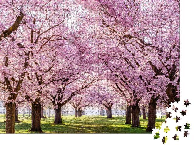 """Puzzle 1000 Teile """"Sakura-Kirschblüten-Allee, wunderschöner Park"""""""