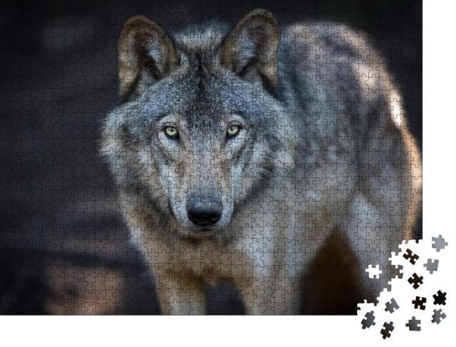 """Puzzle 1000 Teile """"Nahaufnahme eines grauen Wolfes in den kanadischen Wäldern"""""""