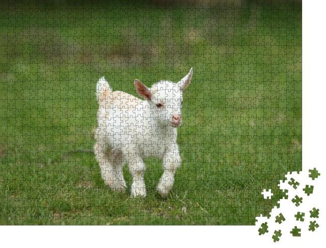 """Puzzle 1000 Teile """"Hübsches weißes Ziegenbaby läuft auf Gras, New England, USA"""""""
