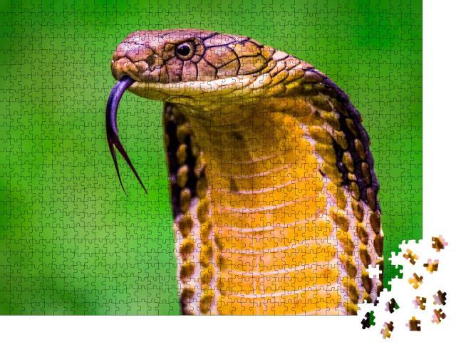 """Puzzle 1000 Teile """"Königskobra Ophiophagus hannah, längste Giftschlange der Welt"""""""