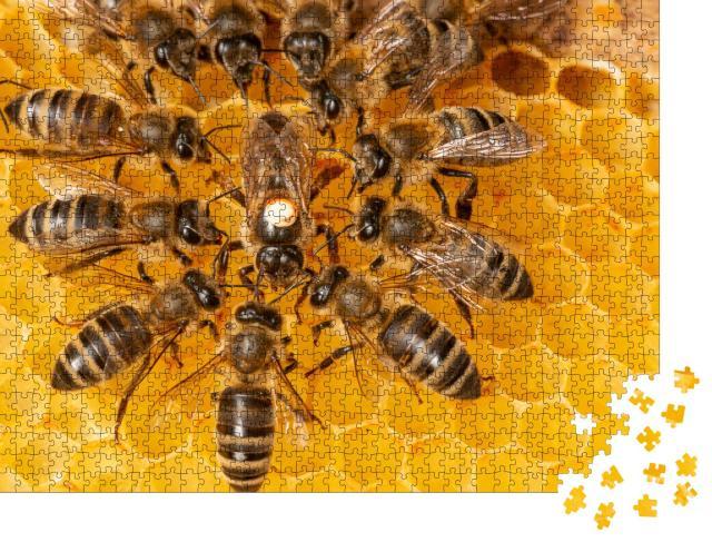 """Puzzle 1000 Teile """"Bienenkönigin markiert mit einem Punkt umgeben von Arbeiterinnen"""""""