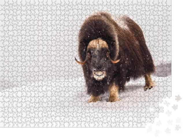 """Puzzle 1000 Teile """"Moschusochse im arktischen Winter"""""""
