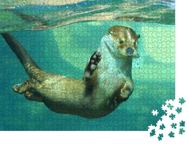 """Puzzle 1000 Teile """"Der Europäische Fischotter unter Wasser"""""""