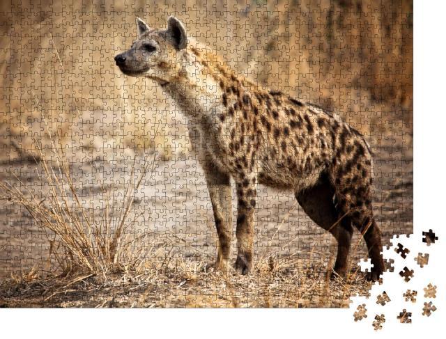 """Puzzle 1000 Teile """"Hyäne im Luangwa-Nationalpark in Sambia"""""""
