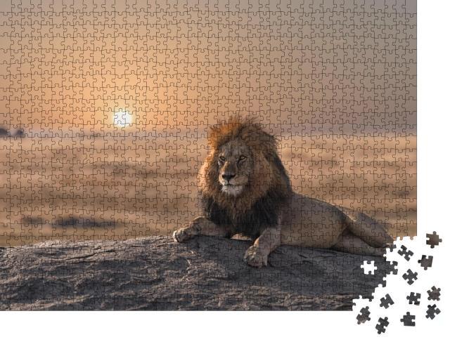 """Puzzle 1000 Teile """"Majestätischer Löwe im Sonnenuntergang"""""""