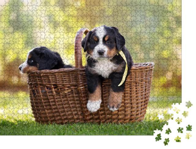 """Puzzle 1000 Teile """"Berner Sennenhund sitzt in einem Korb im Freien"""""""