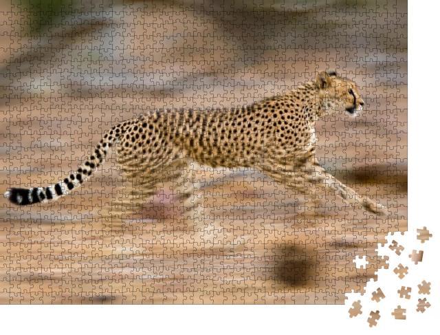 """Puzzle 1000 Teile """"Junger Gepard im schnellen Lauf, bewegungsunscharf"""""""