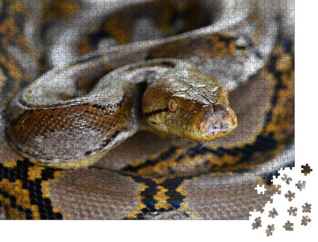 """Puzzle 1000 Teile """"Netzpython Schlange von Borneo, Python reticulatus"""""""