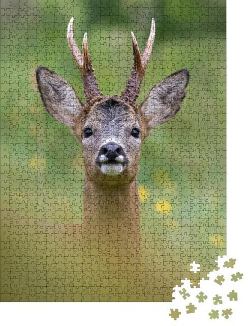 """Puzzle 1000 Teile """"Porträt eines aufmerksamen Rehs in seinem natürlichen Lebensraum"""""""