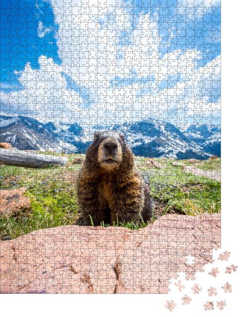 """Puzzle 1000 Teile """"Ein neugieriges Murmeltier im Rocky Mountain National Park, Kalifornien"""""""