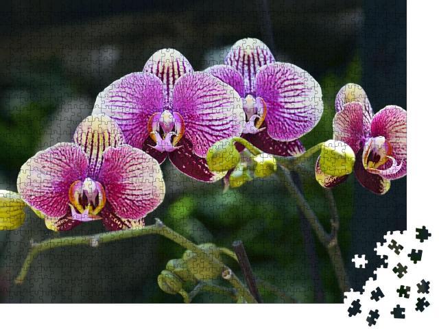 """Puzzle 1000 Teile """"Farbpracht: Orchideenblüte im tropischen Garten"""""""
