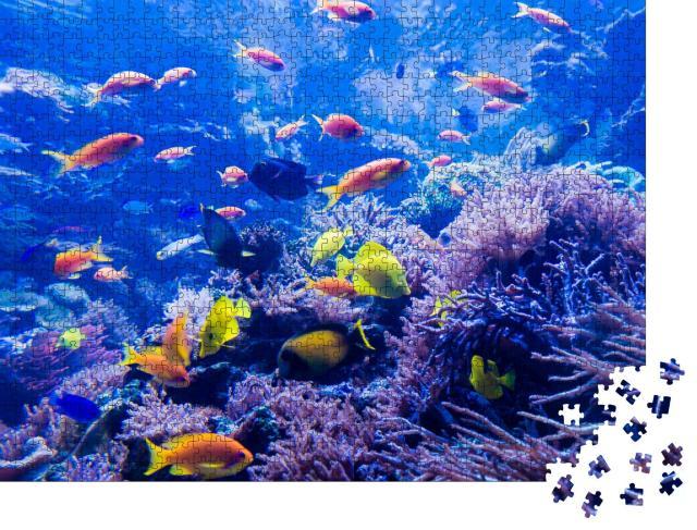 """Puzzle 1000 Teile """"schöne Unterwasserwelt"""""""