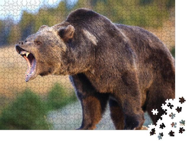 """Puzzle 1000 Teile """"Nordamerikanischer Braunbär: Grizzly"""""""
