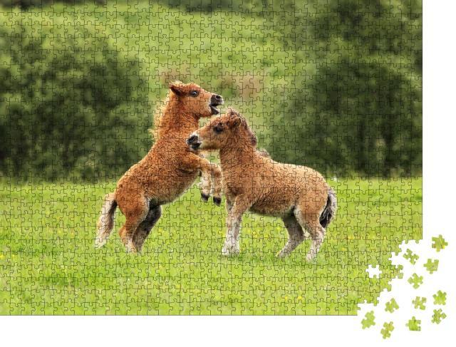 """Puzzle 1000 Teile """"Zwei Shetlandpony-Fohlen im Spiel"""""""