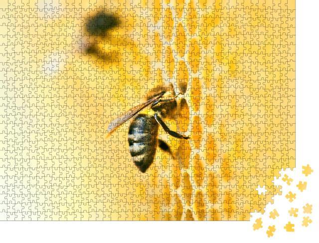 """Puzzle 1000 Teile """"Makroaufnahme: Bienenstock mit Honigwabe und Bienen"""""""