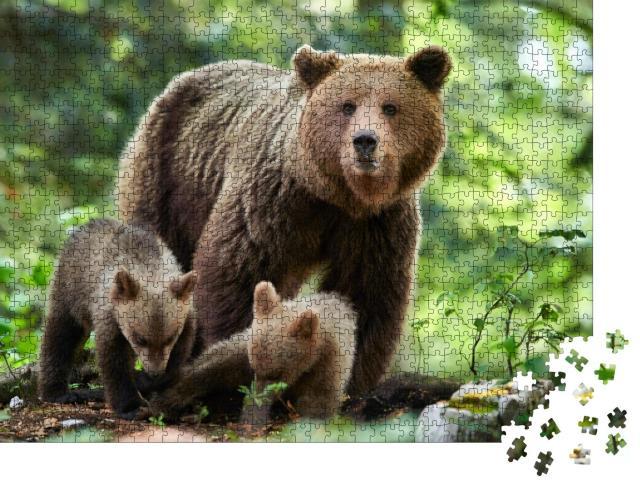 """Puzzle 1000 Teile """"Wilder Braunbär, Ursus arctos in Nahaufnahme"""""""