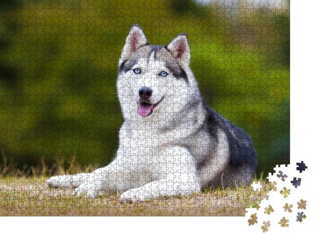 """Puzzle 1000 Teile """"Porträt eines sibirischen Huskys"""""""