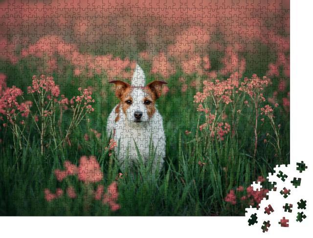 """Puzzle 1000 Teile """"Neugieriger Jack Russell Terrier in einer Blumenwiese"""""""