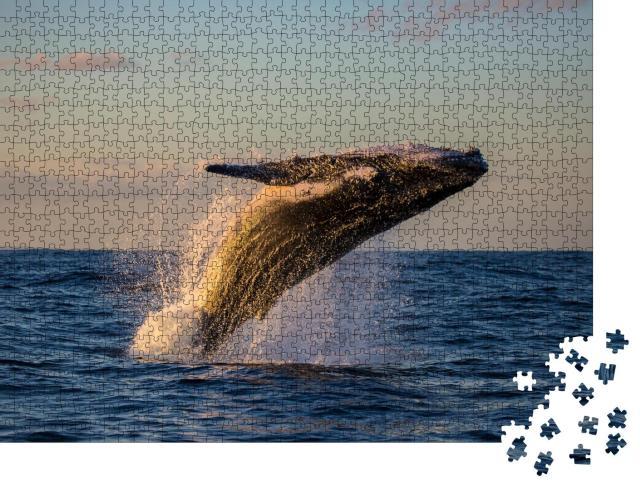 """Puzzle 1000 Teile """"Buckelwal beim Sprung in der Abenddämmerung"""""""