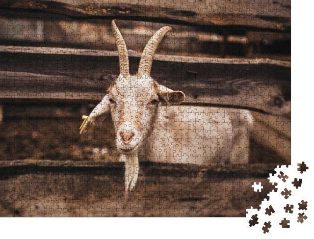 """Puzzle 1000 Teile """"Schöne helle Ziege, die auf dem Bauernhof lebt, Zaun aus Holz"""""""