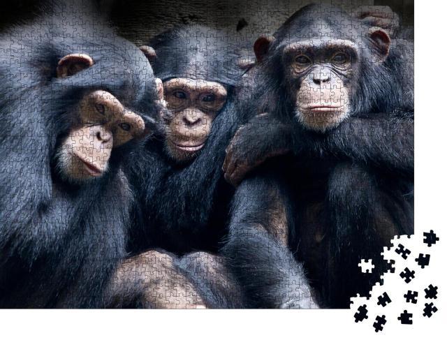 """Puzzle 1000 Teile """"Bonobos und Schimpansen sind die einzigen Arten von Menschenaffen aus Afrika"""""""