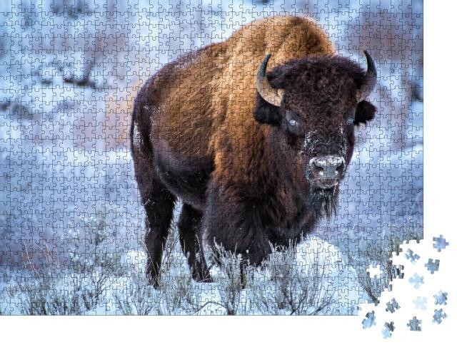 """Puzzle 1000 Teile """"Amerikanischer Bison kauert bei Schnee, Winter, Yellowstone-Nationalpark"""""""