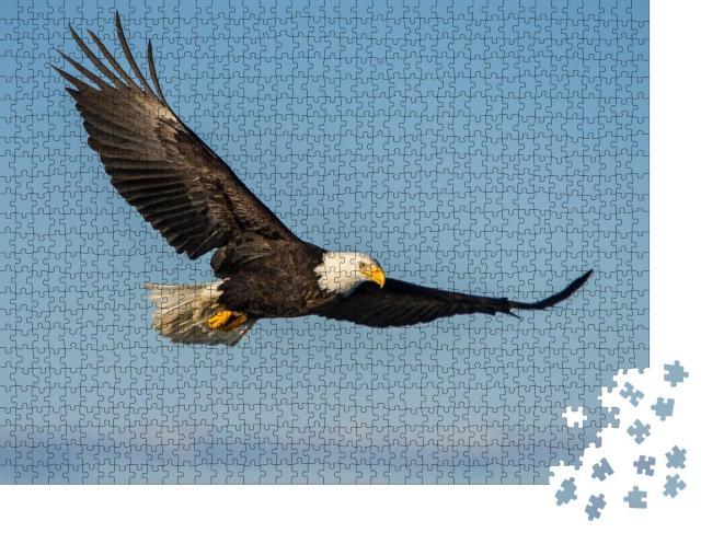 """Puzzle 1000 Teile """"Weißkopfseeadler, der gegen den klaren blauen Himmel Alaskas aufsteigt"""""""