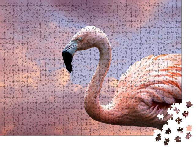 """Puzzle 1000 Teile """"Amerikanischer Flamingo, auch bekannt als Karibischer Flamingo"""""""