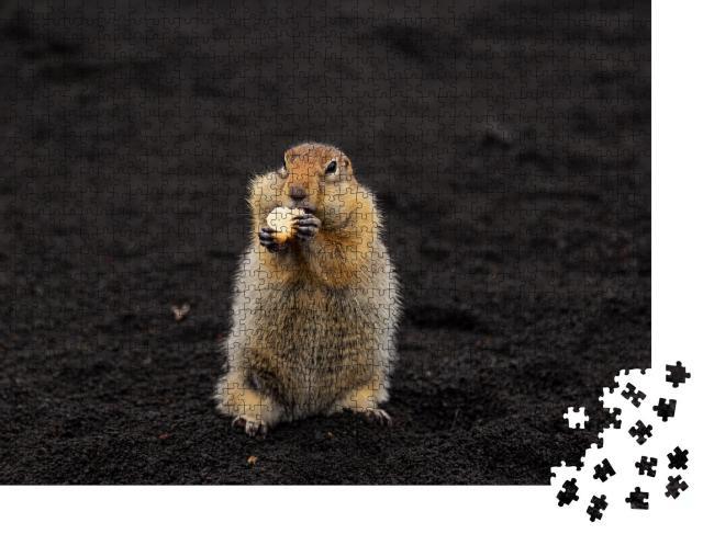 """Puzzle 1000 Teile """"Ein charmantes Erdhörnchen steht auf vulkanischem Sand"""""""